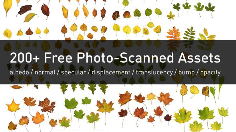 Wojciech Piwowarczyk pubblica 250 immagini di foglie - free to download