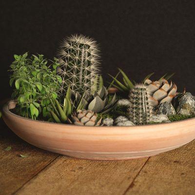 Scene Models Free Dirt Plants