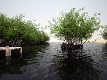 Mangrovias