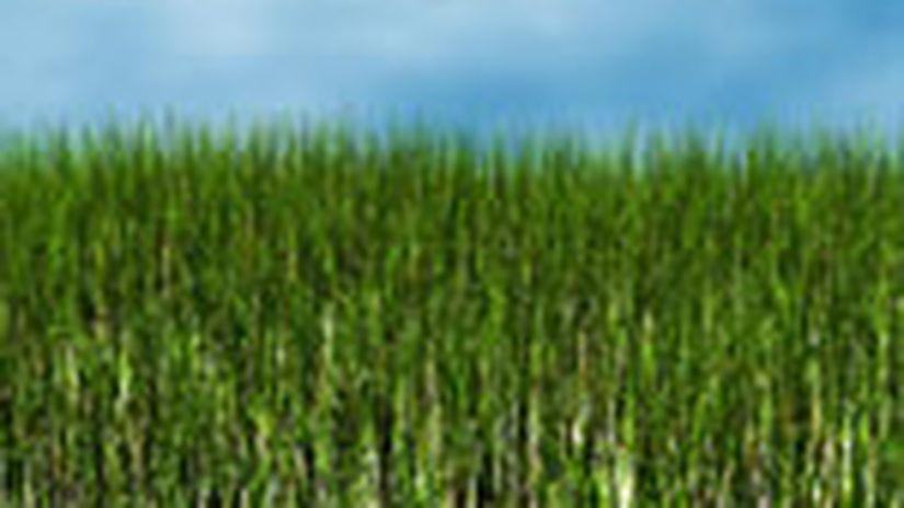 [3dsmax + Grass-O-matic] Erba realistica