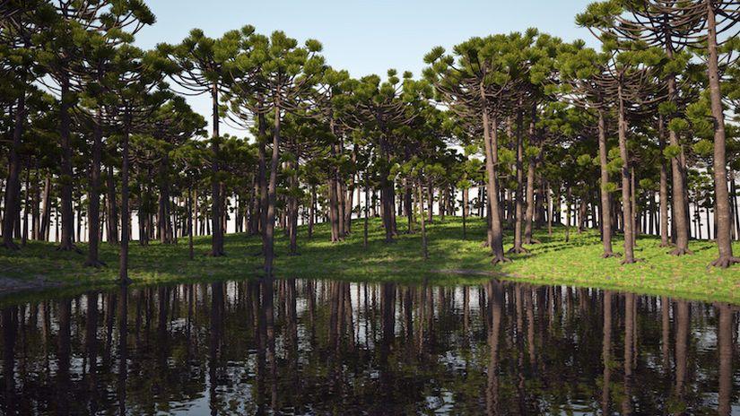 VIZPARK REAL TREES II