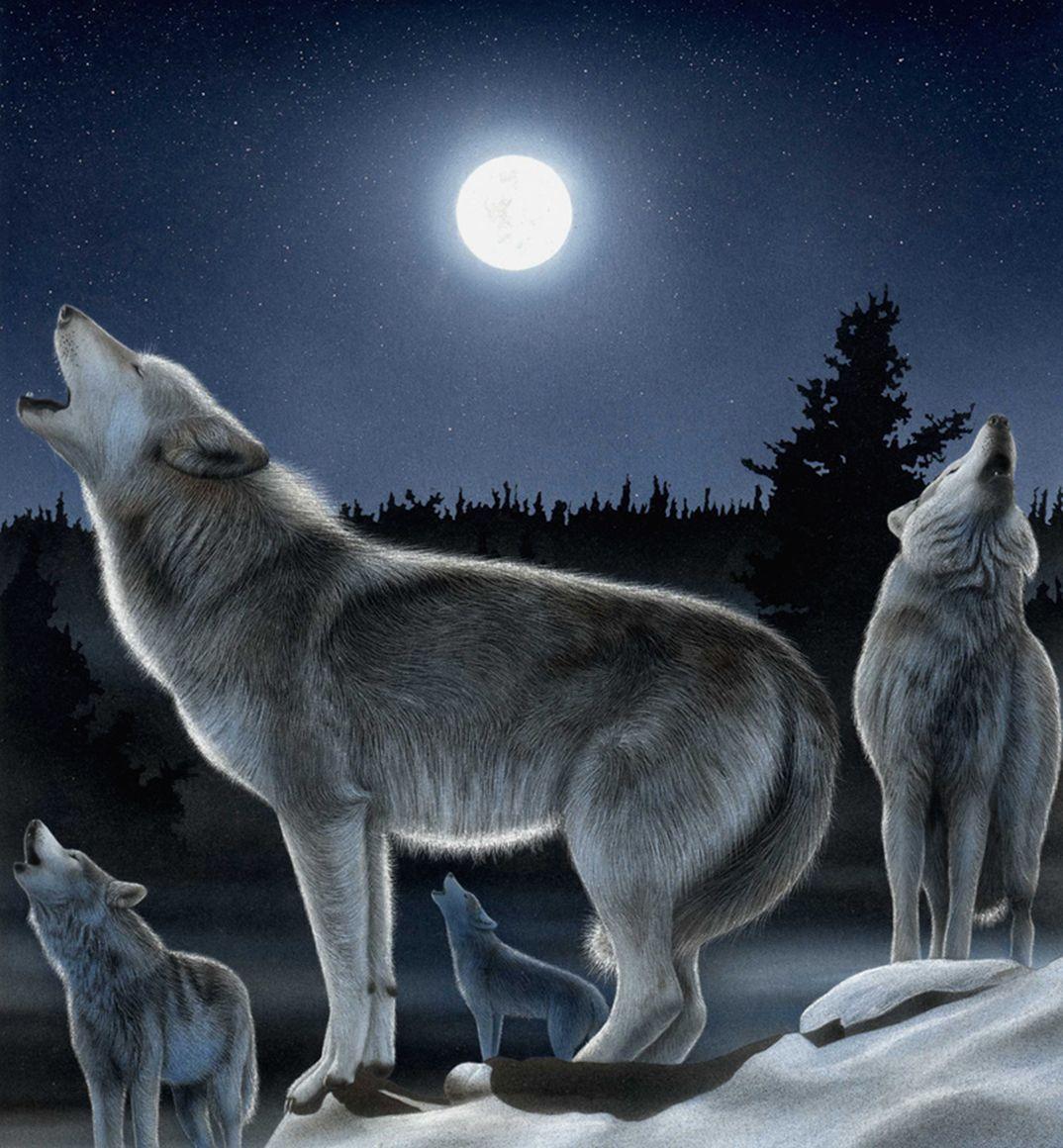 La Luna E Il Lupo Grigio