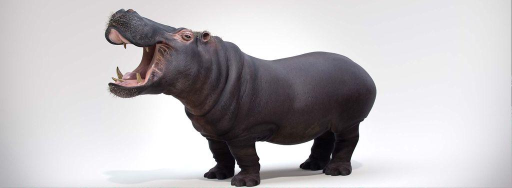 Hippopotamous_Final_Studio.jpg