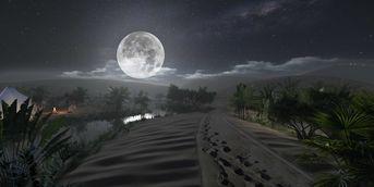 THE DESERT MOOLIGHT