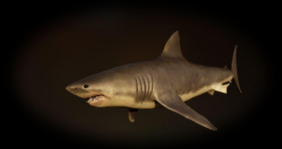 old shark