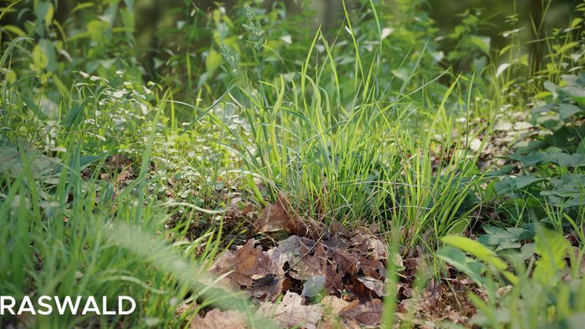 Graswald: vegetazione in Blender