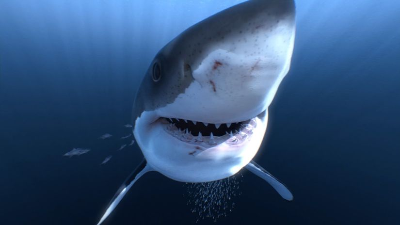 The Great White Shark - 360 3D Virtual Reality