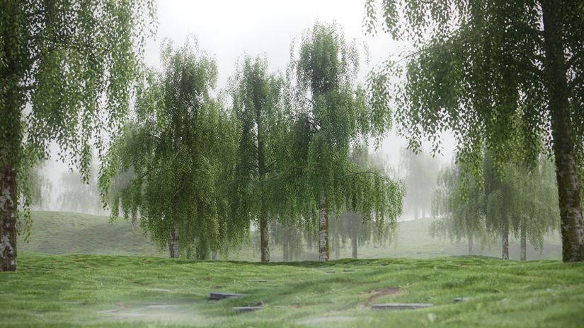 5 Hi-Res Birch Tree Models