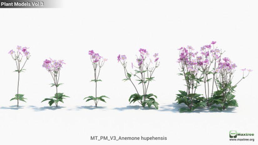 Plant Models vol.3