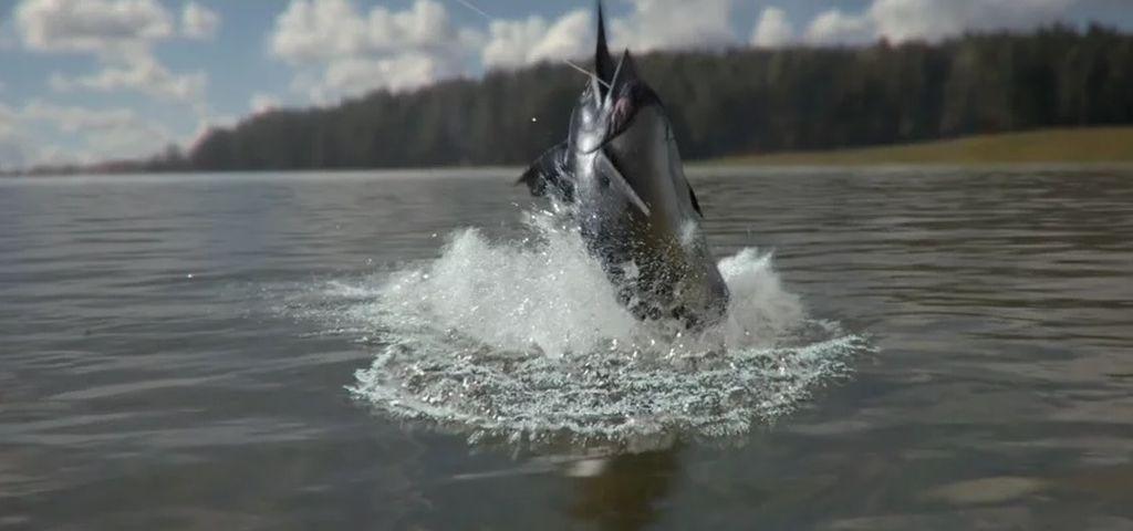 Houdini RnD:Catching the Swordfish - VFX & BREAKDOWN