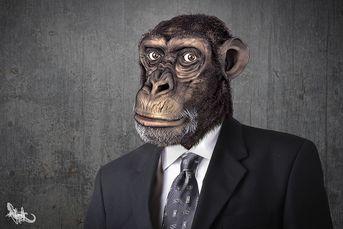 Speed sculpt timelapse testa di scimmia