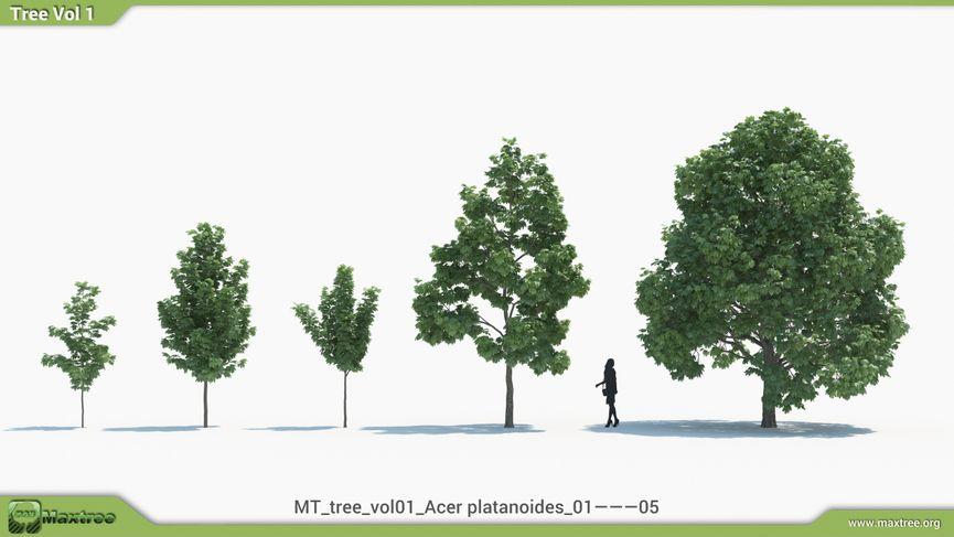 Maxtree MT Tree Vol 1