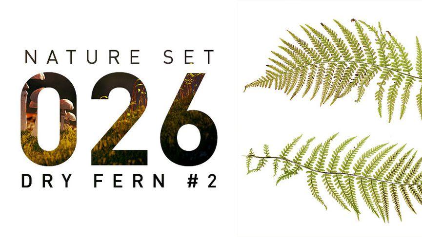 Oltre 200 texture di foglie da scaricare gratuitamente