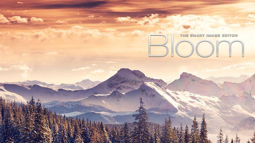 Bloom 1.0
