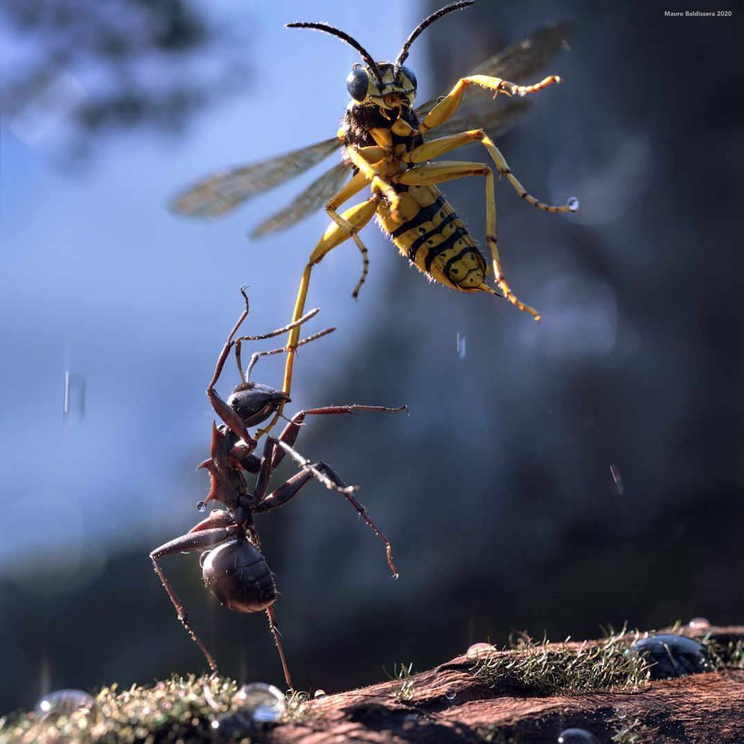 Bugs War, Ant VS wasp