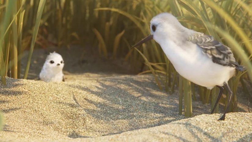 Le HDRI utilizzate da Pixar per il corto Piper scaricabili gratuitamente