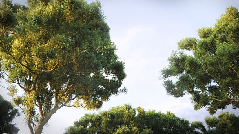 The Grove 3D 3 - vegetazione per Blender sempre più realistica