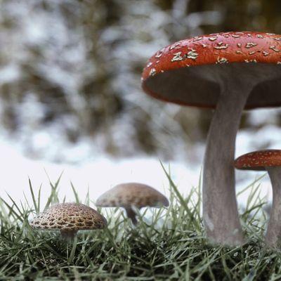 Mushroom Winter