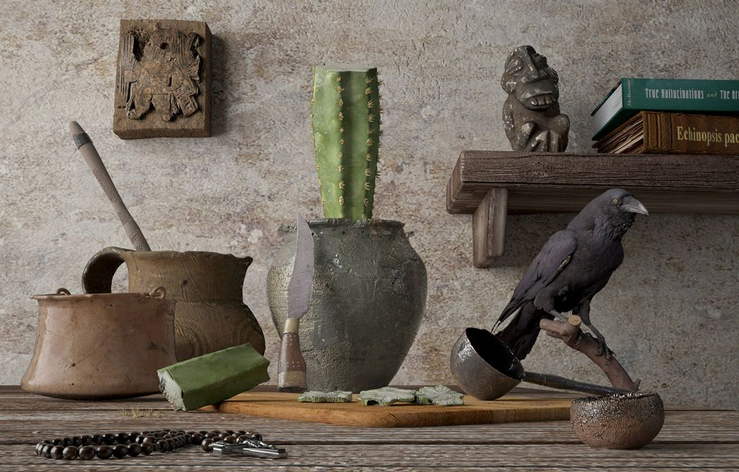 Mesa cactus San Pedro (Echinopsis pachanoi)
