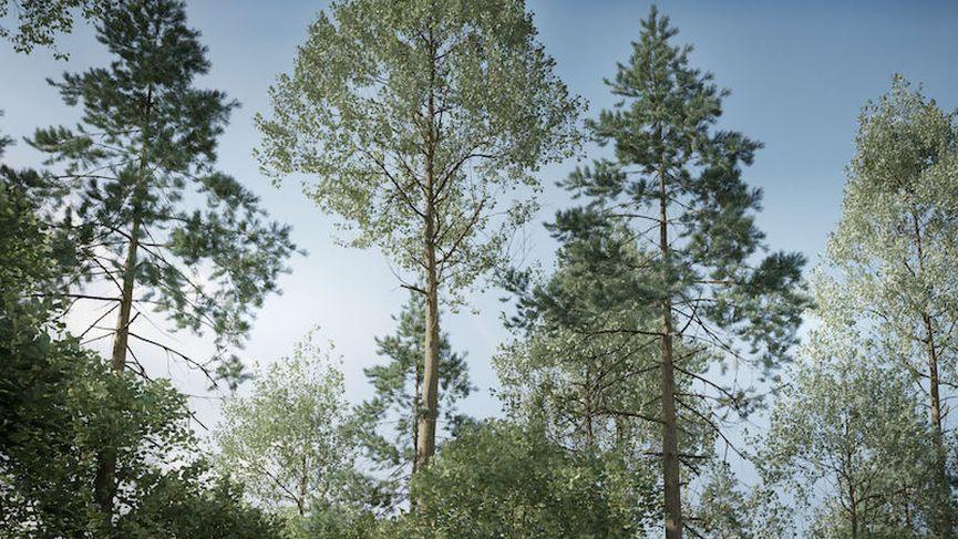 The Grove 8: alberi realistici per Blender