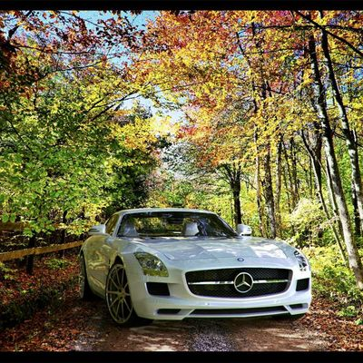 AMg on the trees road